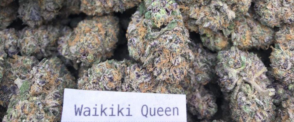 waikiki queen